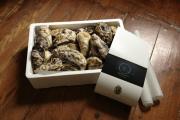 Melhores ostras do Algarve.