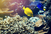 O mergulho na zona costeira de Albufeira