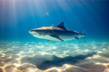 Experiência única de Pesca de Tubarão em Sagres